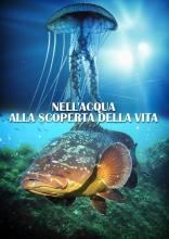 NELLACQUA_ALLA_SCOPERTA_DELLA_VITA